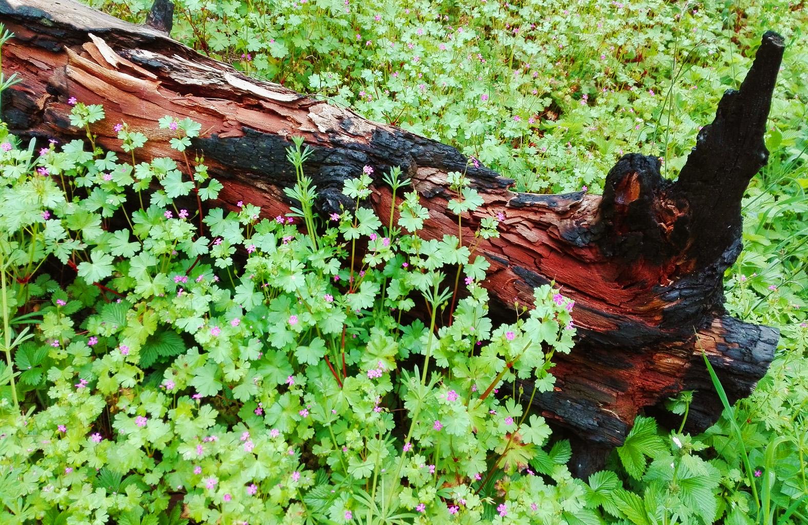 angoli di foresta sulla Majella
